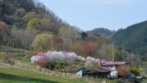農園(春)