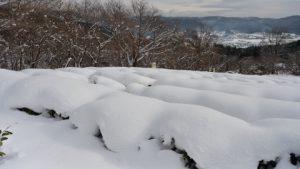 農園(冬)