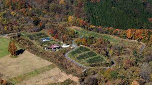 紅茶農園 全景