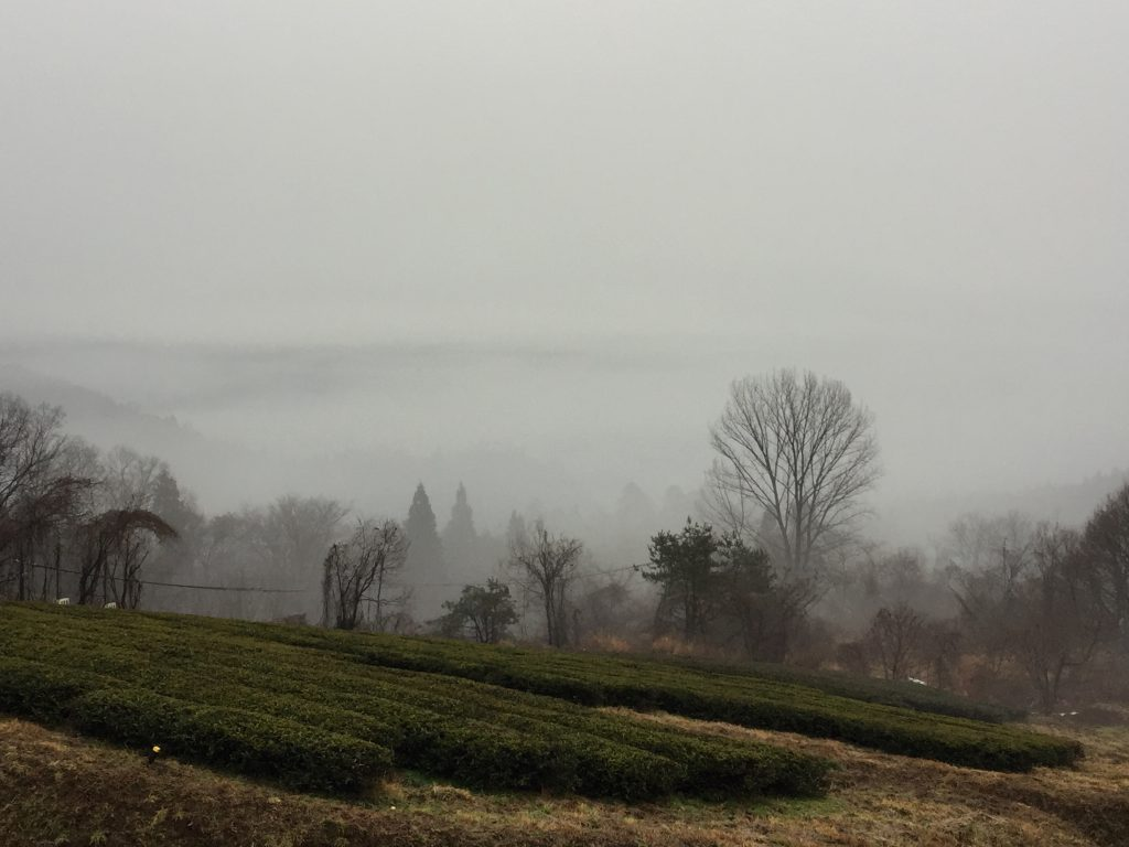 霧 紅茶畑